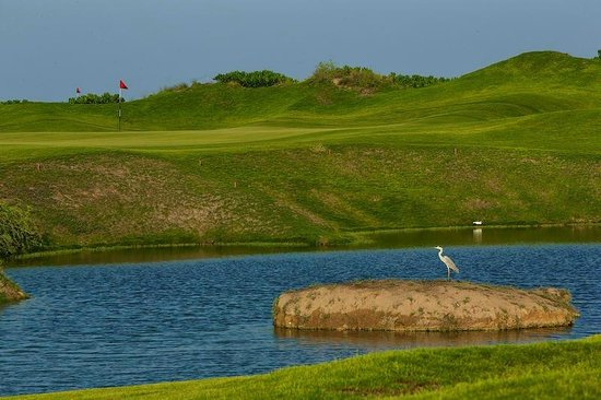 Almouj Golf : Al Mouj golf, bird