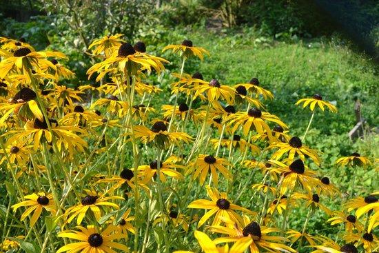 La Grange aux Herbes : dans le jardin de la chambre d'hôtes