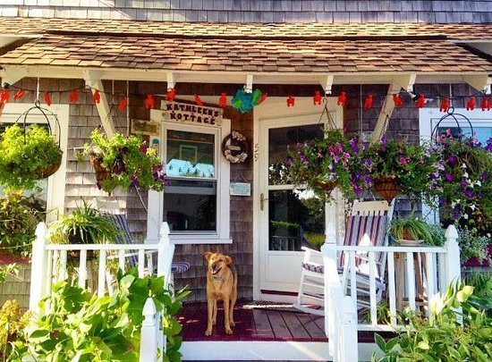 Kathleen's Kottage on Martha's Vineyard: Our pup enjoying the front porch