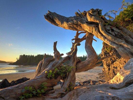 Middle Beach Lodge: Bezaubernde Sonnenuntergänge sind garantiert.