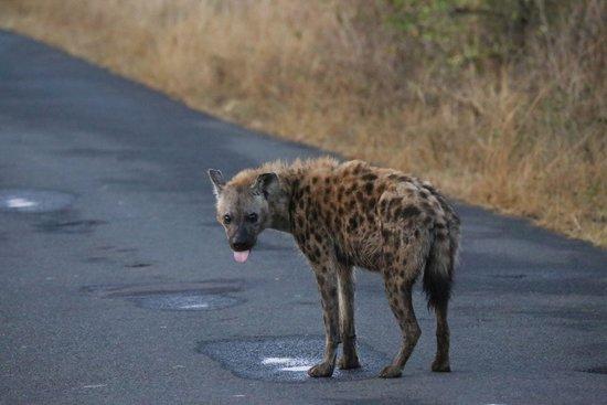 Monzi Safaris: Early in the morning