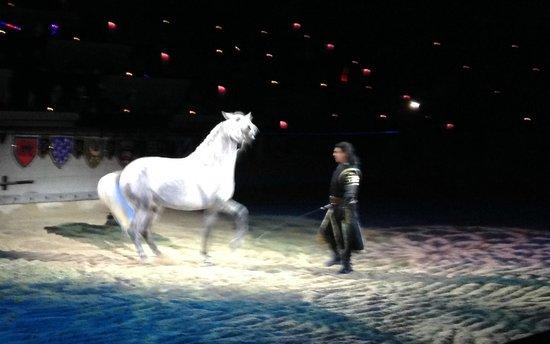 Medieval Times : Spanish stallion