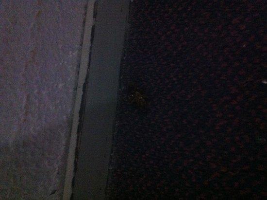 Kalithea Sun & Sky Hotel : Una bella piattola morta nel corridoio che è' li da una settimana!!!!