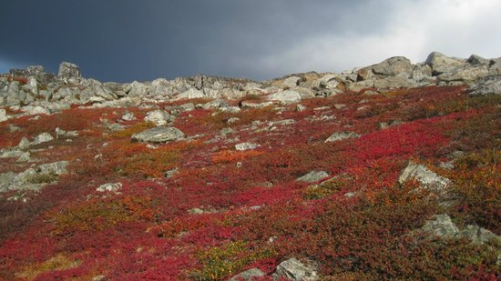 Labrador, Kanada: Experience geology, wildlife and culture