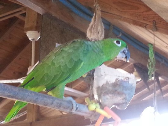 West Bay Lodge and Spa: One of the parrots that call WBL home