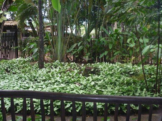 Pousada Bambu: Jardim