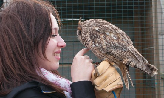 Dublin Falconry : One of the most cute owls i've ever saw!