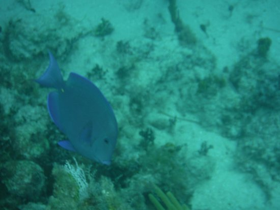 Blue Hole Watersports : One of many fish we saw