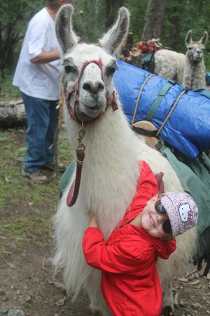 Wild Earth Llama Adventures: Our daughter with Apollo!