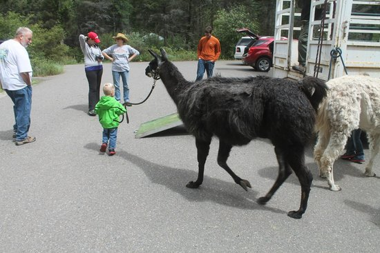 Wild Earth Llama Adventures: Our son helping Diego load up to go home!