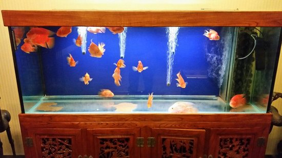 Traditional View Hotel: Fish tank in foyer.