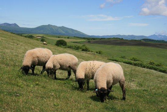 Tawadaira: 草をむち羊たちと西別岳