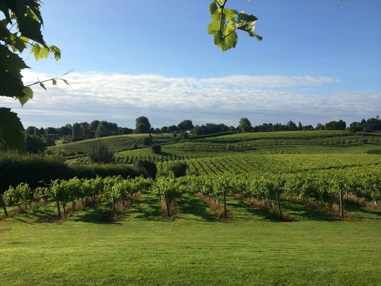 Three Choirs Vineyards: View from our room