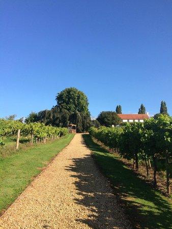 Three Choirs Vineyards: Early morning walk