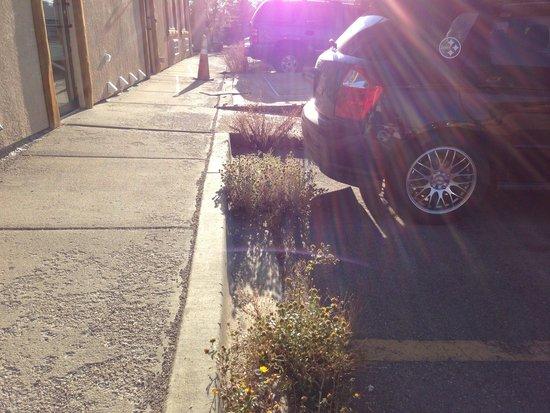 Super 8 Kremmling : Weeds in the parking lot