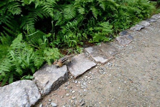 Alberta Falls: chipmunk scurrying past