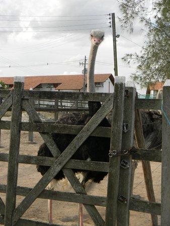 Villa Hipica Resort: animais