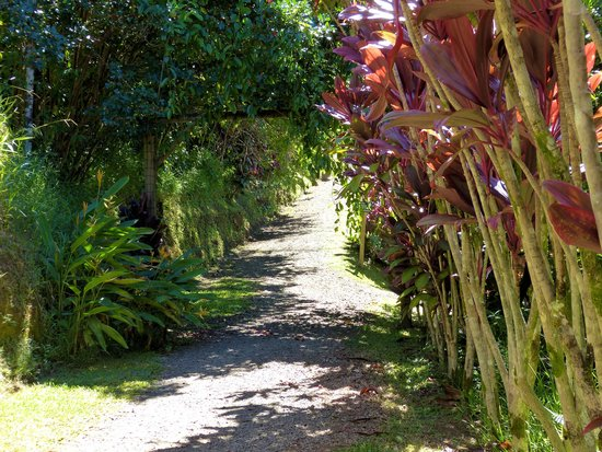 Garden of Eden Arboretum Maui Walking Path Alden Cornell Molokai ...