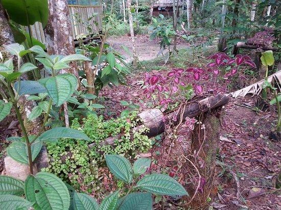 Omshanty : gardens