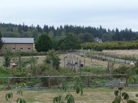Bay Breeze B&B Cottages: Overlooking the farm with sheep, chickens, ducks and garden