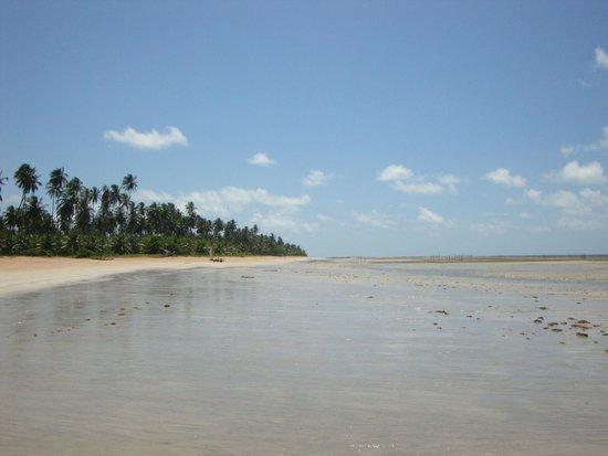 Sao Miguel dos Milagres Beach: Praia