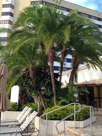 Hilton Orlando Lake Buena Vista - Disney Springs™ Area : zona piscine