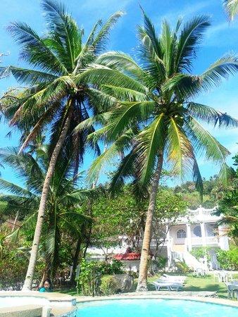 Blue Crystal Beach Resort: Coconut palms near pool area