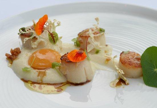 Black Salt Restaurant: Scallops with Cauliflower Puree & Apricot