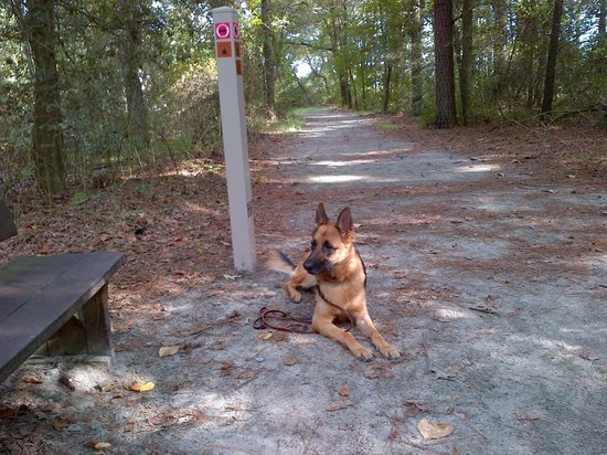 Trap Pond State Park: Breaktime at the halfway point on Loblolly Trail.