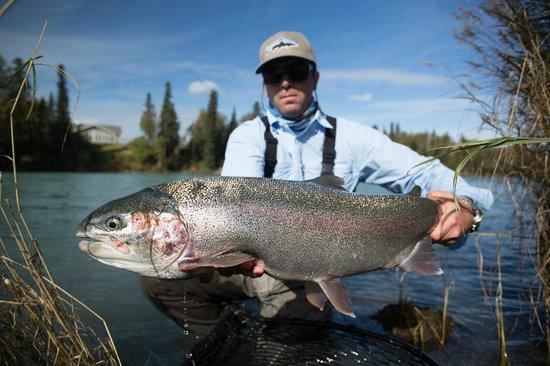 Alaska's Angling Addiction - Day Tours: Kenai rainbow caught with Alaska Angling Addiction