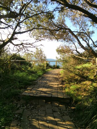 Manly Scenic Walkway: 上の方