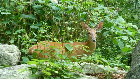 Old Rag Mountain Hike: One of the locals