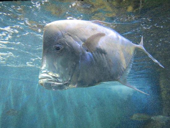 Paranagua, PR: Peixe grande
