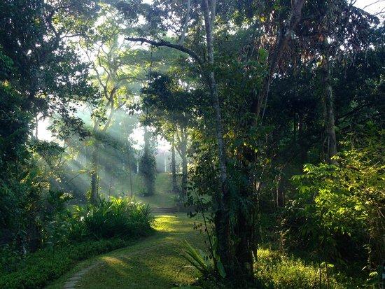 Apa Villa Illuketia: Discover the garden.