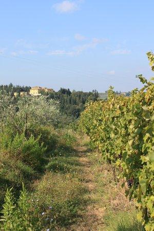 Tuscan Wine Tours by Grape Tours: Vista