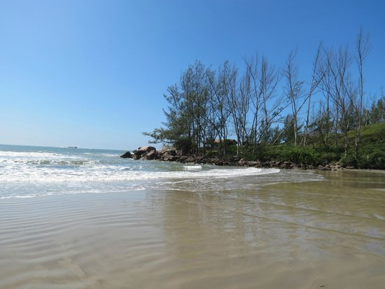 Ouvidor Beach : Árvores