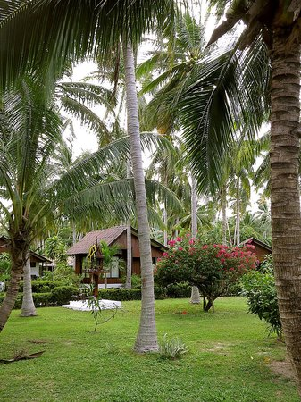 Am Samui Resort: The grounds at Am Samui