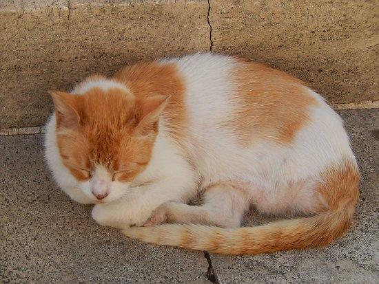 Torre Argentina Cat Sanctuary Gatto Rosso E Nero Foto Di Torre