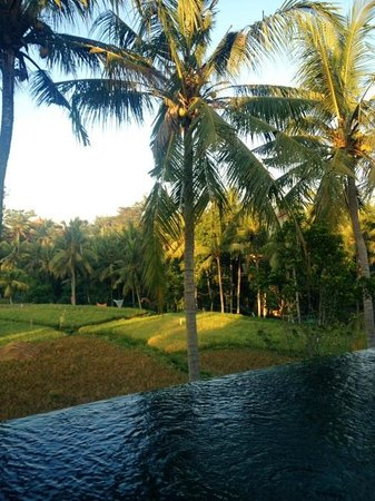 Motama Villa: Padi field view from pool/room