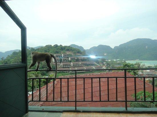 Phi Phi Arboreal Resort : вид из номера