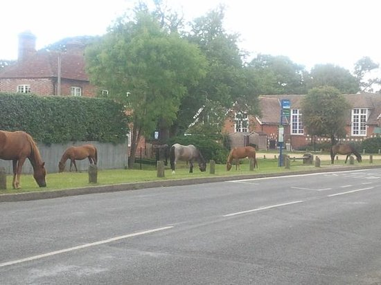 Hollycroft Bed & Breakfast : free roaming horses in front of the villa school