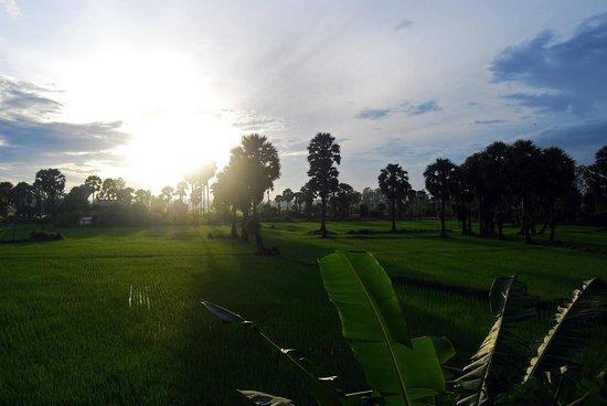 Champa Lodge: рассвет над рисовым полем