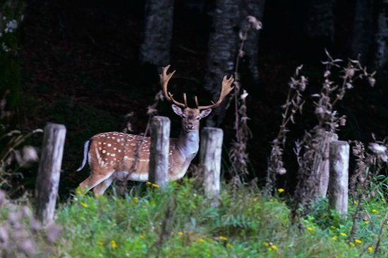 Locanda dei Baroni: A stag spotted a short distance from the hotel