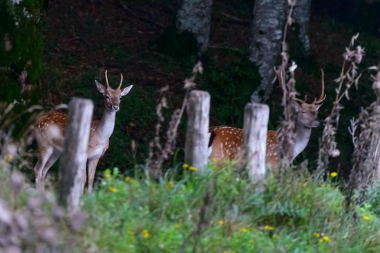 Locanda dei Baroni: young and old stags spotted near the hotel