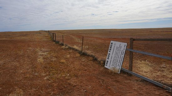Oodnadatta Track: The Dog Fence