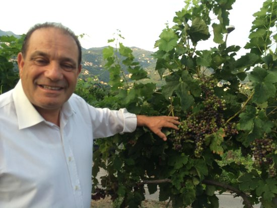 Casa Fasano: Tino and his grapes