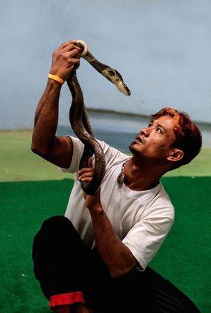 Змеиное Шоу на Пхукете