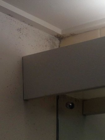 Chifley on South Terrace: Mold