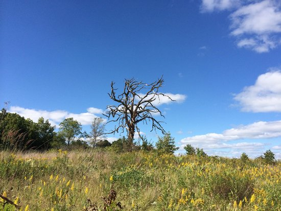 Fort Atkinson, WI: Gnarly tree