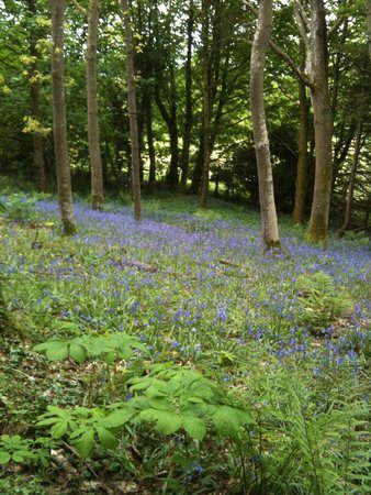 Cally Palace Hotel: nearby bluebell wood